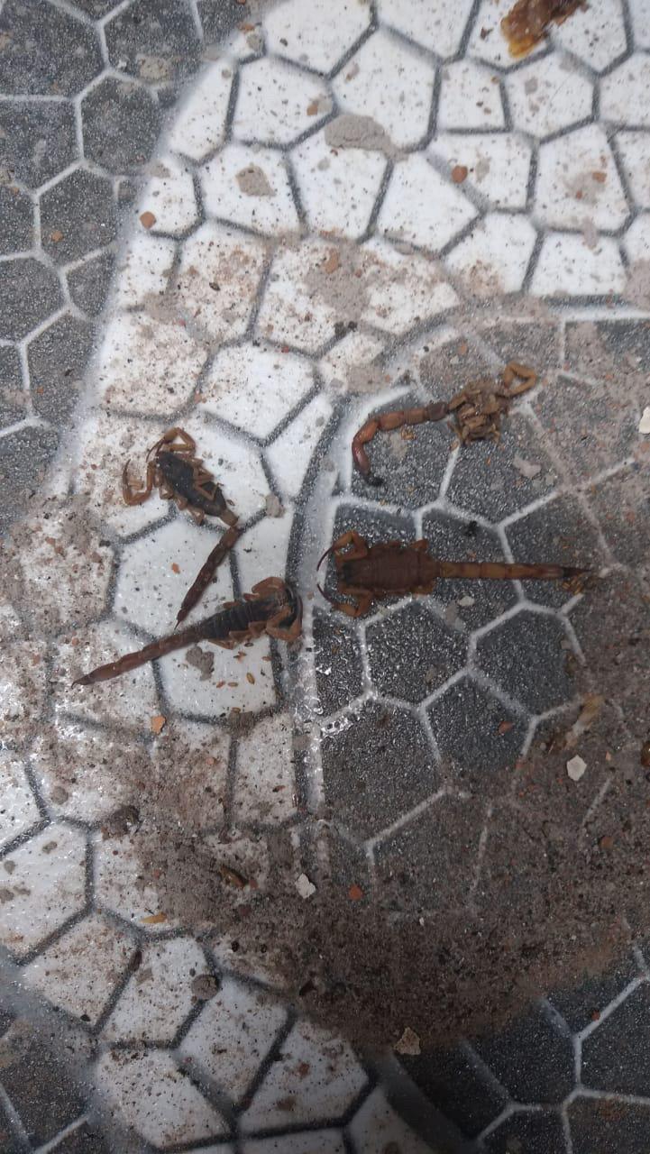 escorpiões1