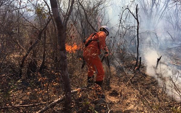 Incêndios florestais atingem quatro regiões na Bahia